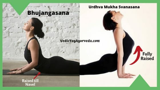 Urdhva Mukha Svanasana and Bhujangasana Comparison Image
